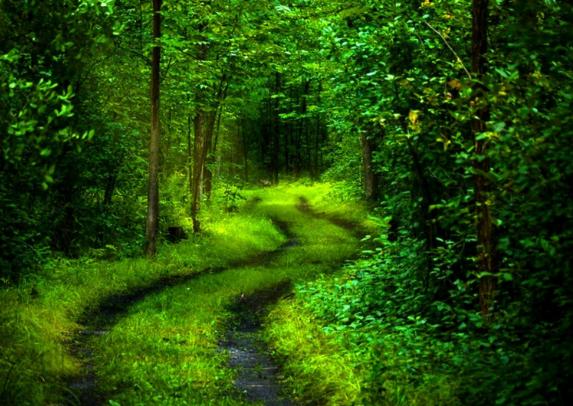 deep path